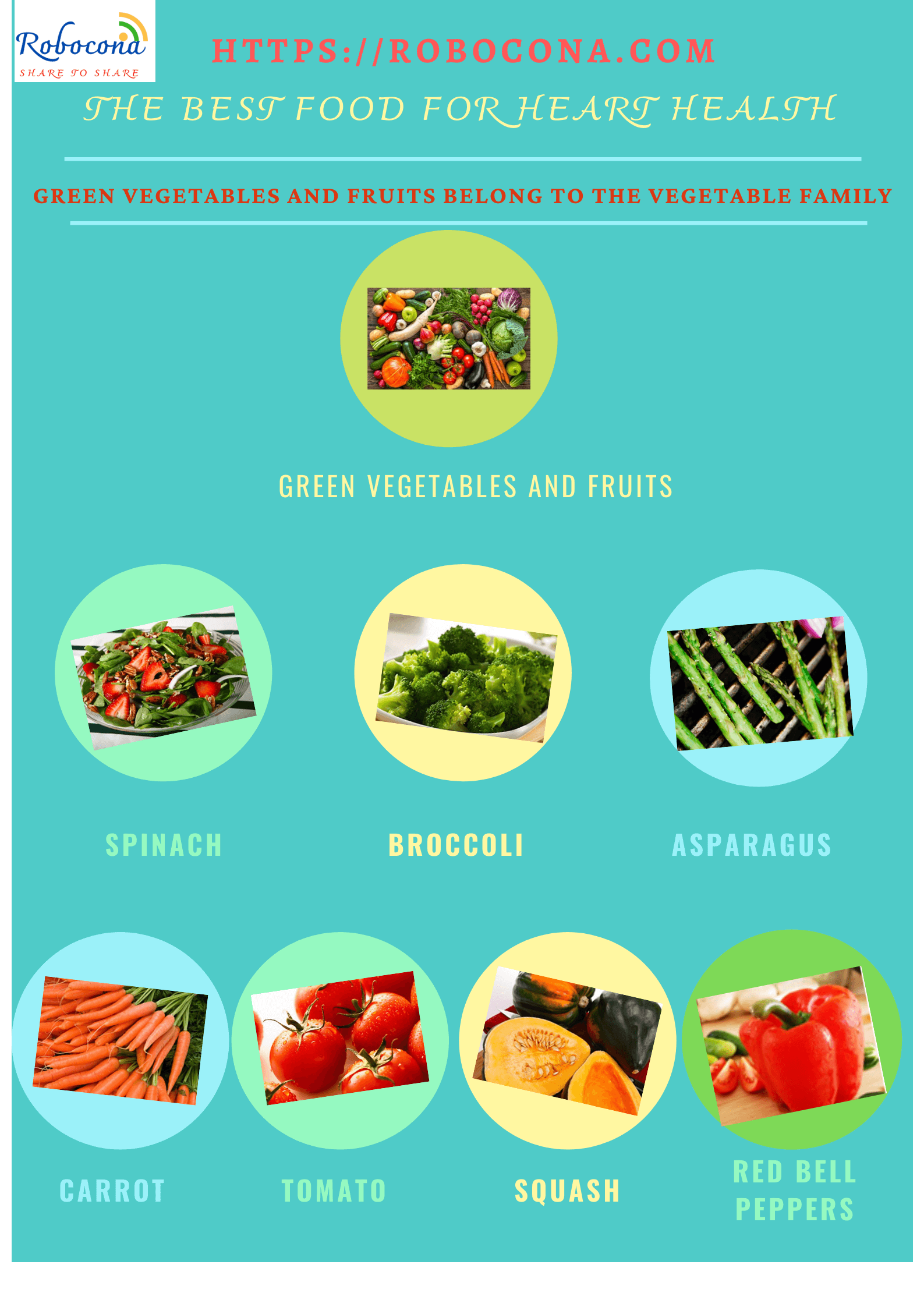 Green vegetables and fruits belong to the vegetable family